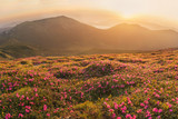 Fototapety Beautiful mountain landscape with blossoming rhododendron flower