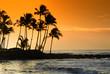 Hawaii Paradise.