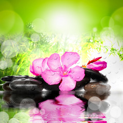 Spa concept. Flower and stones.