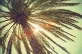 Palm tree and shining sun over bright sky