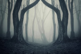magical gate in mysterious forest with fog