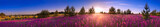 Fototapety summer landscape with the blossoming meadow, sunrise.panorama