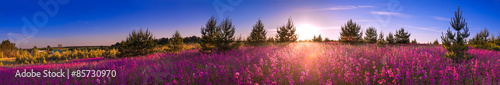 obraz PCV summer landscape with the blossoming meadow, sunrise.panorama