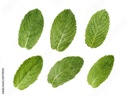 Six mint leaves set isolated on white background