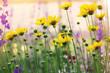 beautiful soft yellow flowers