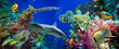 Tropical Anthias fish with net fire corals and shark