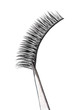 Постер, плакат: False eyelashes Isolated false eyelashes on white background