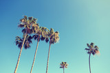 California Palm Trees in Retro Style