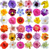 Fototapety Big Selection of Various Flowers Isolated on White Background