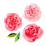 Watercolor flower collection. Pale pink roses watercolor illustration