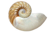 Inside view of a nautilus shell