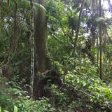 Fototapeta Misty jungle, rainforest scene.