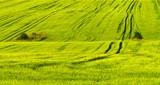 Fototapeta Krajobrazy wiejski trawa zielony pole