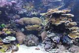 Fototapeta Underwater coral reef
