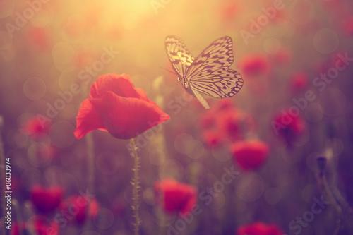 Fototapety, obrazy : Poppy and butterfly
