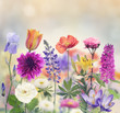 Colorful Flowers - 86044384