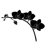 Fototapety Vector orchid silhouette