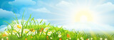 Fototapety Summer meadow background  with grass, flowers, sky and sun