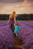 Fototapety Woman and child in back walking in a lavender field