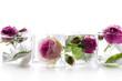 Obrazy na płótnie, fototapety, zdjęcia, fotoobrazy drukowane : Frozen rose