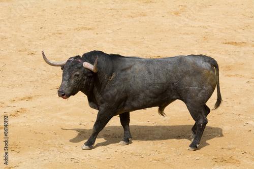 Staande foto Stierenvechten Toro bravo español en la arena