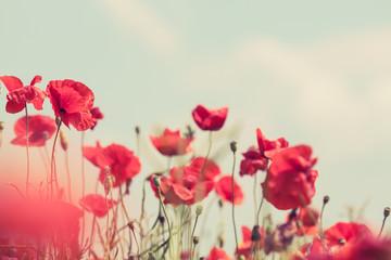 Poppy flowers retro peaceful summer background