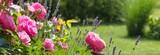 Rosenbeet im Garten - Bannerformat - 86194342