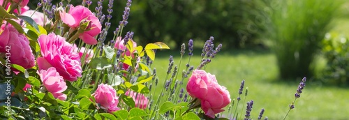 rosenbeet-im-garten-bannerformat