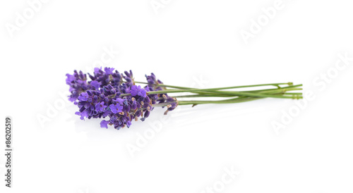 Lavender flowers isolated on white - 86202519
