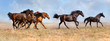 Group of  beautiful horse run gallop on field with dust
