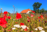 House in field of poppies