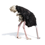 Fototapety ostrich burying head in sand ignoring problems