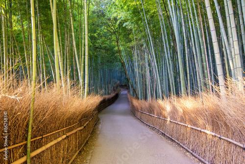 The Arashiyama Bamboo Grove of Kyoto, Japan.