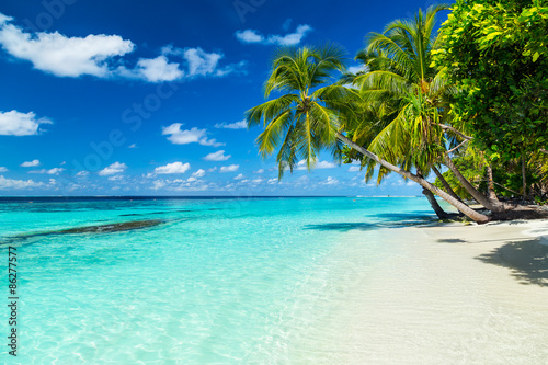 Fotografiet coco palms on tropical paradise beach with turquoise blue water and blue sky