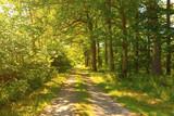 Waldweg - 86284184