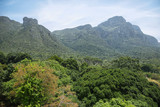 View of mountains from Kirstenbosch botanical gardens, South Africa poster