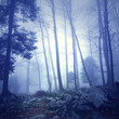 Mystic blue color dark foggy forest background with fantasy light. Picture was taken in south east Slovenia, Europe.