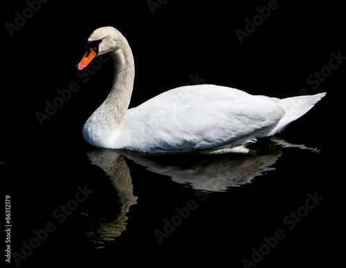 Fotobehang White swan
