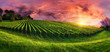 Leinwandbild Motiv Vineyard panorama at magnificent sunset