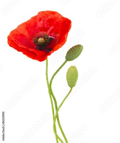 Foto op Plexiglas Klaprozen Poppy flowers