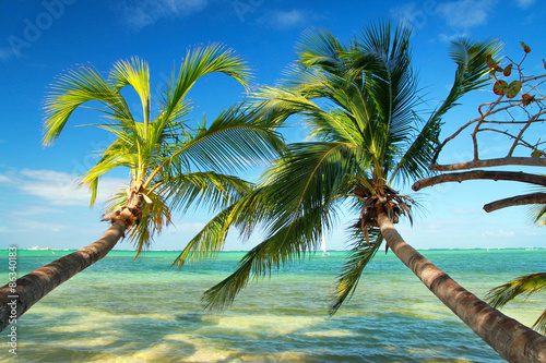 Obraz na Szkle Beautiful palms on tropical beach