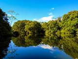 Fotoroleta Amazon river