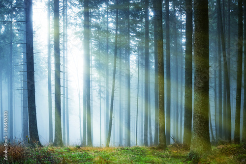 Sun shining through fog in the forest