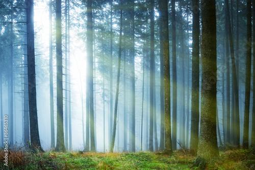 Sun shining through fog in the forest © Pavlo Vakhrushev