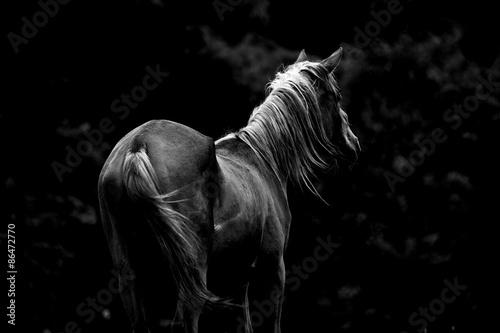 Poster モノクロの馬