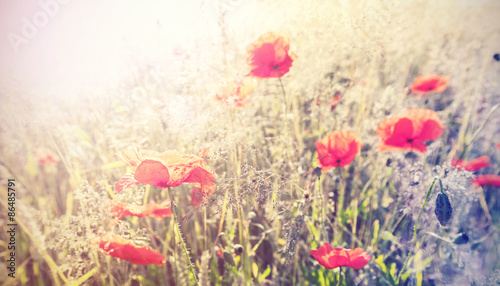 Panel Szklany Vintage retro style poppy flowers background, shallow depth of f