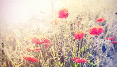 Naklejka Vintage retro style poppy flowers background, shallow depth of f