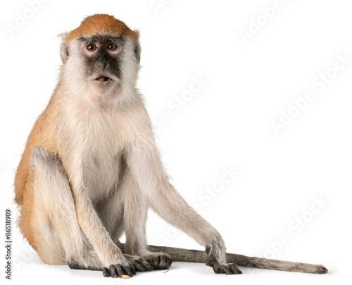 Aluminium Aap Monkey, Isolated, Animal.