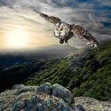 Fototapeta Animal, beak, beautiful.
