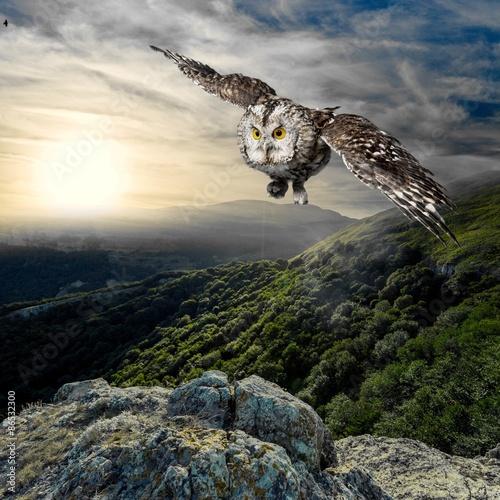 Animal, beak, beautiful.